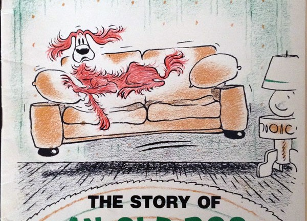 amos-the-story-of-an-old-dog-and-his-couch