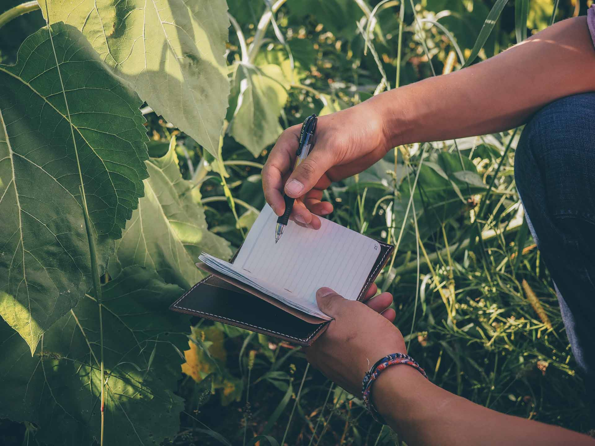 Using a Field Notes notebook right where it belongs: out in the field.