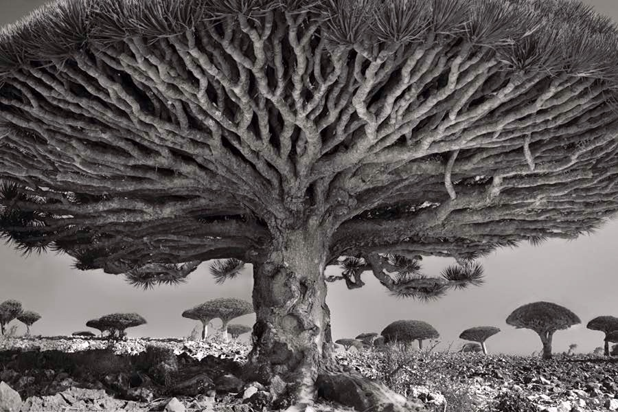 Photo: Beth Moon