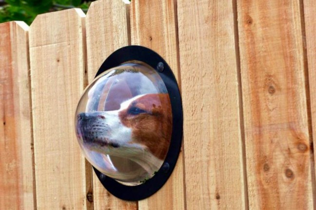 petpeek-fence-window-for-pets