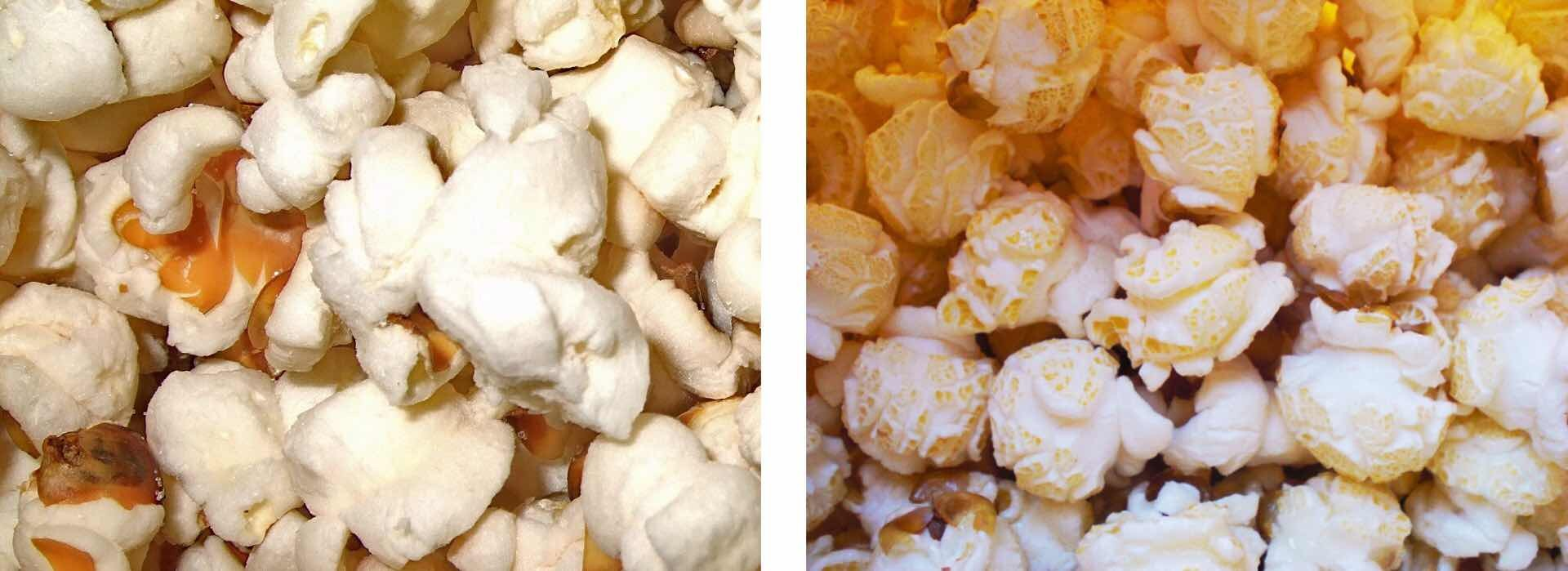 Left: Butterfly popcorn (photo by Joelle Nebbe-Mornod)Right: Mushroom popcorn (photo by Daniel Sotirhos)